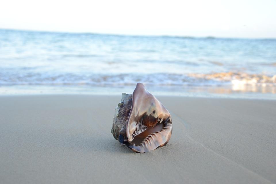 seashell-on-beach-1108198_960_720.jpg